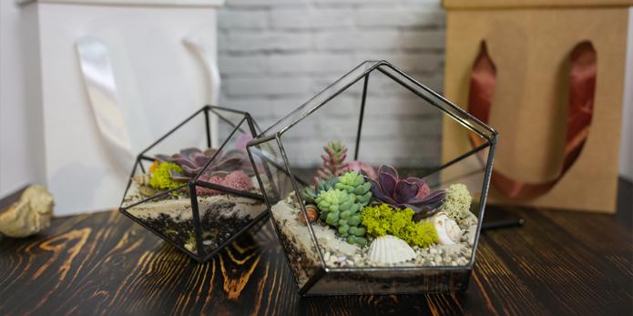 Хотите украсить интерьер растениями?
