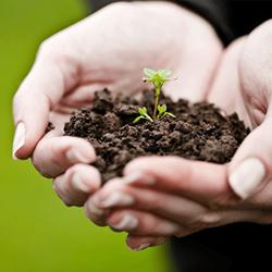 Все для выращивания и ухода