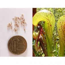 Семена Дарлингтонии Калифорнийской